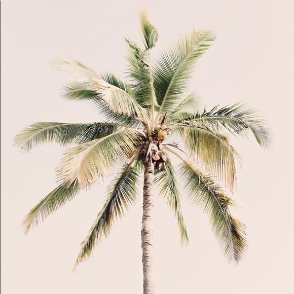 tropicalvibes55